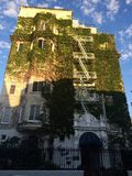 Building Ivy. Blue sky's green ivy covered building classic Stock Photo