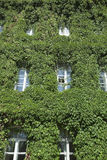 Building in the ivy Royalty Free Stock Photos
