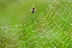 Spider web Stock Photo