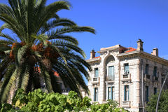 Building in Nice France behind palm tree. Typical architecture in the old city of Nice France on the French Riviera with palm tree Stock Photos