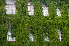 The building is overgrown with greenery. Nature takes her back. Object bloomed stock image