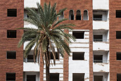 Building and a palm tree stock image