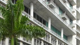 Building and a palm tree stock footage stock video footage