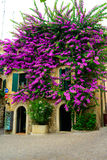 The building in purple flowers Garda Stock Image