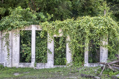 Building ruins and vegetation Stock Image