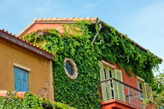 Building's part covered by plant Stock Images