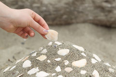 Building a Seashell Collection on the beach Royalty Free Stock Images