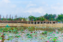 Building site with new homes river lotus flowers Stock Photos