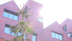 Building and spruce. Sun glare Royalty Free Stock Images