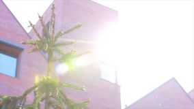 Building and spruce. Sun glare Royalty Free Stock Photo