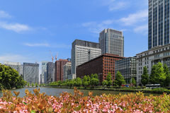Building in Tokyo from park view in sunny day Stock Images