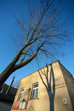 Building and tree Royalty Free Stock Photos