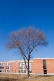 Building and tree. Office building and tree in winter Stock Photo