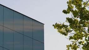 Building and tree. Modern building corner and plane tree in summer stock footage