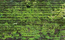 Building in tropics, covered with a green moss Stock Photos
