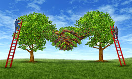 Building Trust And Growing  A Partnership. Building business trust and growing a financial partnership through an agreement as two growing trees merging together Royalty Free Stock Photos