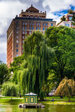 Building and weeping willow tree at the Public Garden in Boston Royalty Free Stock Photo