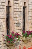 Building windows and flower parterre Royalty Free Stock Image
