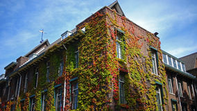 Building wrapped by vegetation. Exterior of a building almost covered by the vegetation. Climbing plant that during time created a special exterior effect on Stock Photo