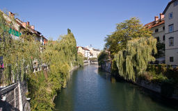 Buildings facing the river in Ljubljana. With weeping willows on the banks royalty free stock photography