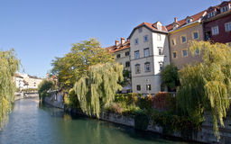 Buildings facing the river in Ljubljana. With weeping willows on the banks royalty free stock photo