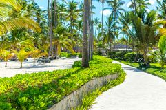 Buildings among palm trees in the resort stock photography