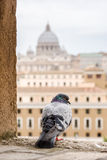 Buildings of Rome with Vatican St Peter Dome in background Stock Image