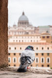 Buildings of Rome with Vatican St Peter Dome in background Royalty Free Stock Photo
