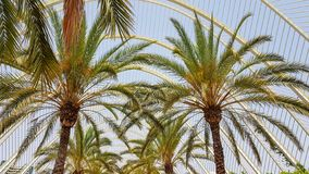 Ride on the palm-filled streets in valencia spain royalty free stock photography