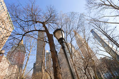 Buildings and trees in New York Royalty Free Stock Images