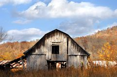Built to Last. Barn stands after years of weather and wind.  White washed wooden boards.  Blue sky and fall foilage Royalty Free Stock Photography