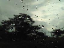 Buio di panorama dell'albero della natura della pioggia Fotografia Stock Libera da Diritti