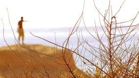 buisson Image libre de droits