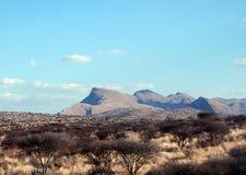 Buisson africain Photos libres de droits