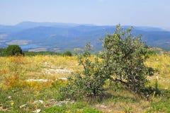 Buisson croissant isolé Photo libre de droits