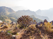 Buisson d'arbre avec la fleur pourpre sur la colline de montagne avec la chaux et le pré Photos libres de droits