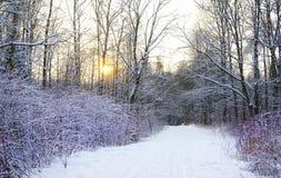 buisson d'arbres de coucher du soleil de lumière du soleil de neige de parc d'hiver Image stock