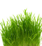 Buisson d'herbe verte Images stock