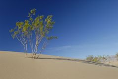 Buisson de désert sur une dune de sable Photographie stock