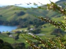 Buisson de floraison Images stock
