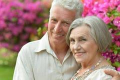 Buisson de floraison proche de couples supérieurs Photo stock