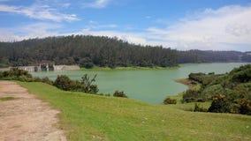 Buisson de jungle de rivière de paysage photos libres de droits