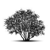 Buisson de silhouette avec les feuilles et l'ombre illustration de vecteur