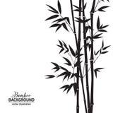 Buisson en bambou Images libres de droits