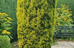 Buisson formé de jardin avec le banc images stock