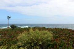Buisson isolé d'arbre et d'herbe sur la côte atlantique Photographie stock