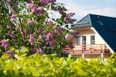 Buisson lilas près à la maison Photographie stock