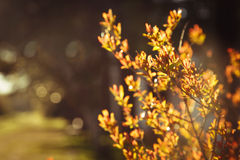 Buisson orange Photos libres de droits
