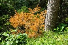 Buisson orange dans la forêt Images stock