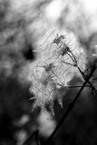 buisson Pile-fleuri Photo stock